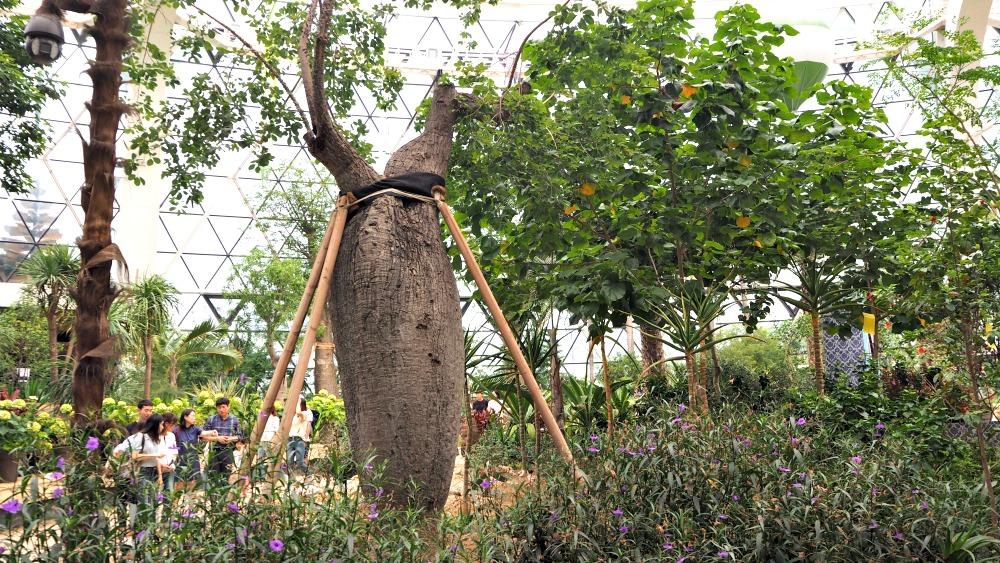 seoul-botanic-park