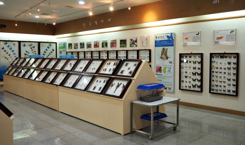yeosu-insects-museum