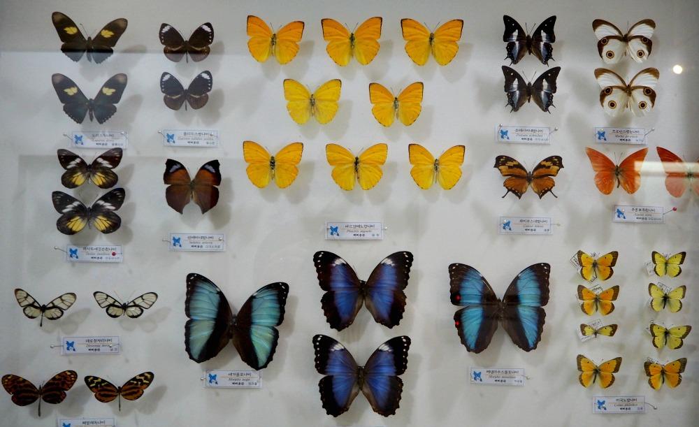 yeosu-butterfly-museum