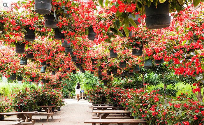 asan-world-flower-botanical-garden