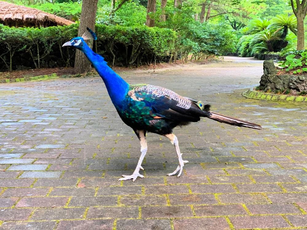 hallim-park-bird-garden