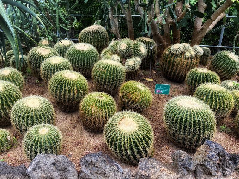 hallim-park-cactus