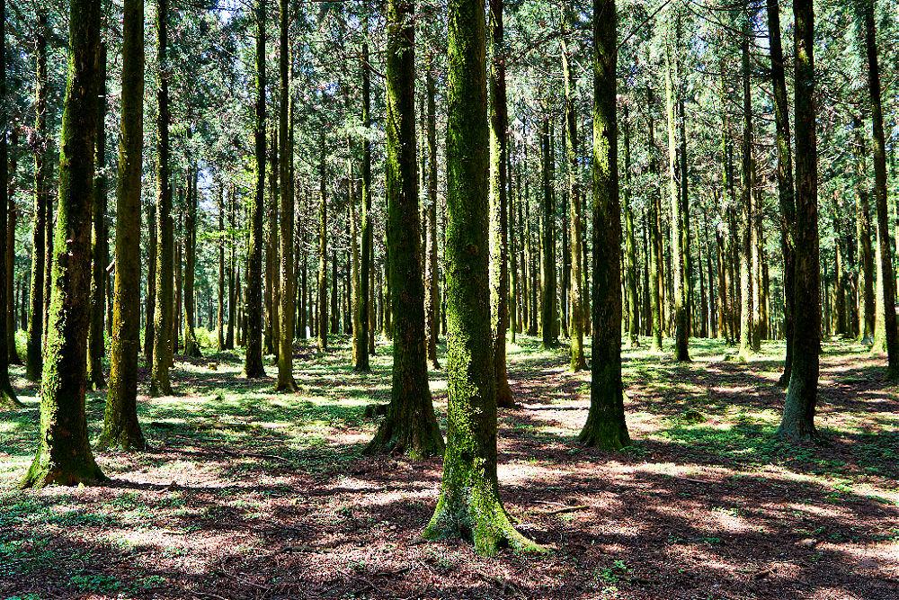 jeolmul-forest-park