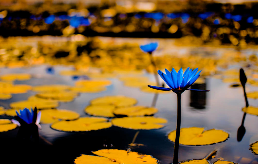 hangdong-blue-arboretum