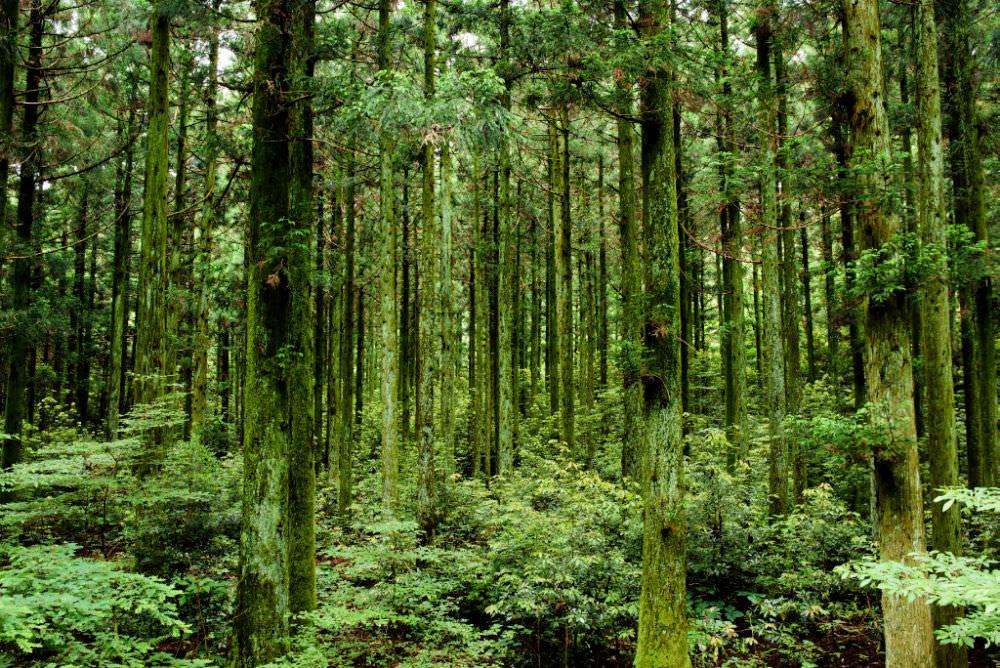 saryeoni-forest-path