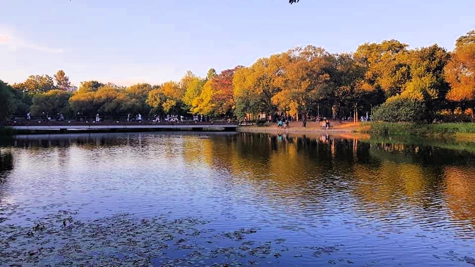 seoul-forest-park