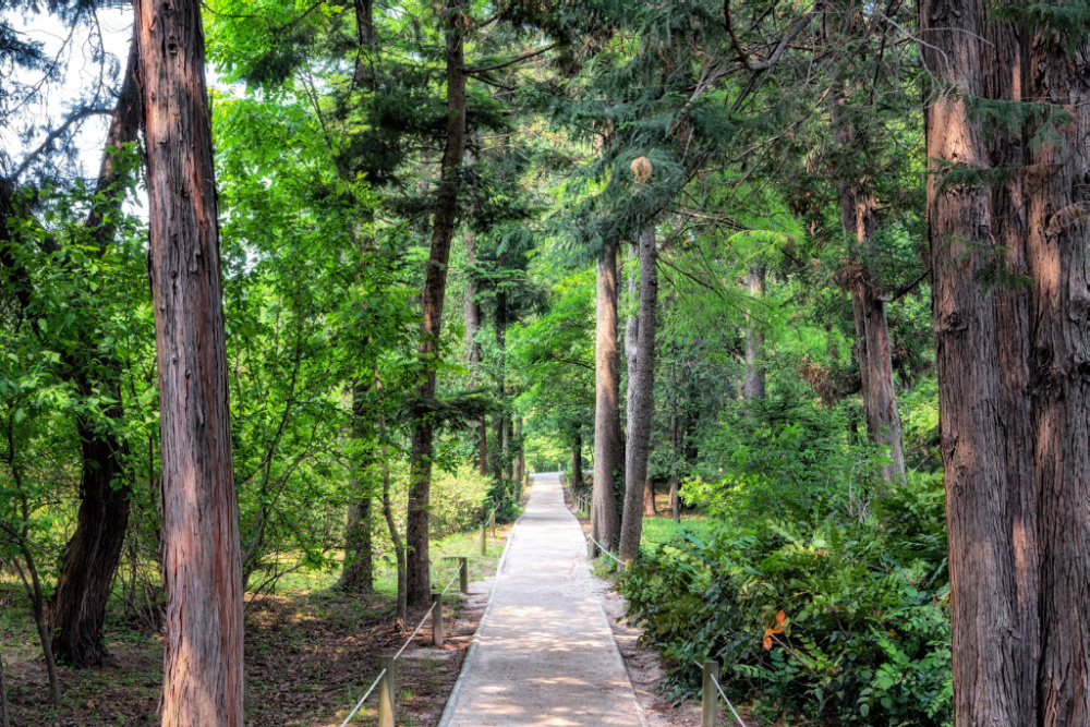 seoul-grand-park-forest