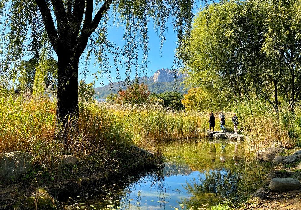 seoul-iris-garden