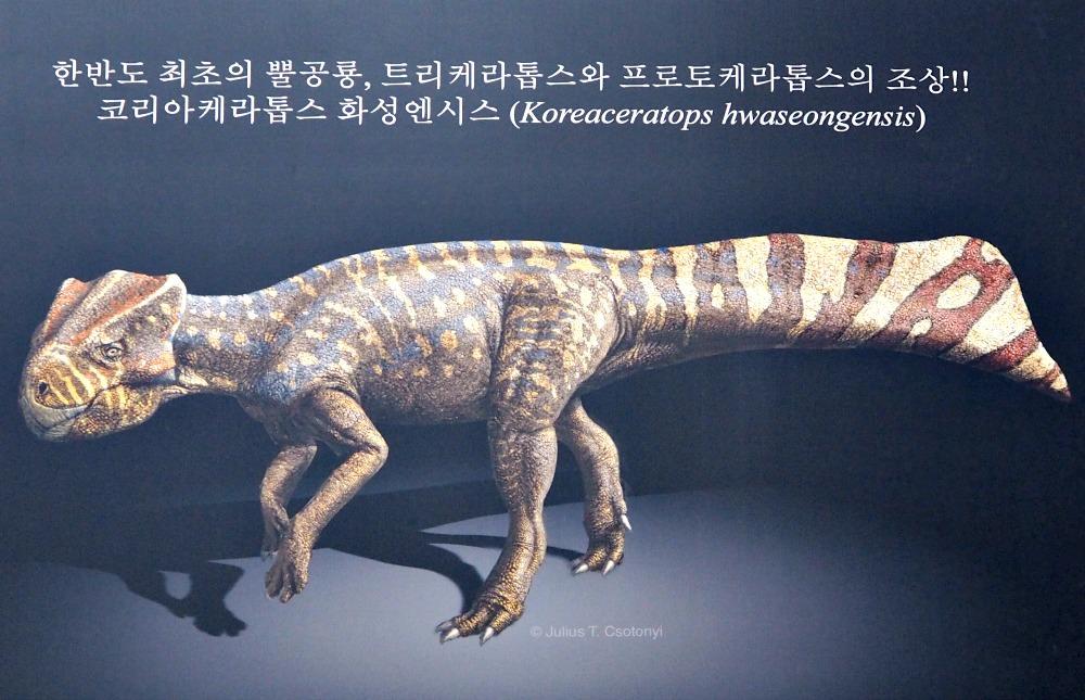 koreaceratops-hwaseongensis-dinosaur