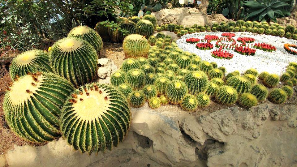 yeomiji-botanical-garden